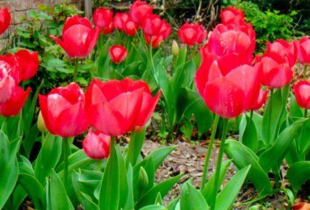 Flower Sale school fundraising idea