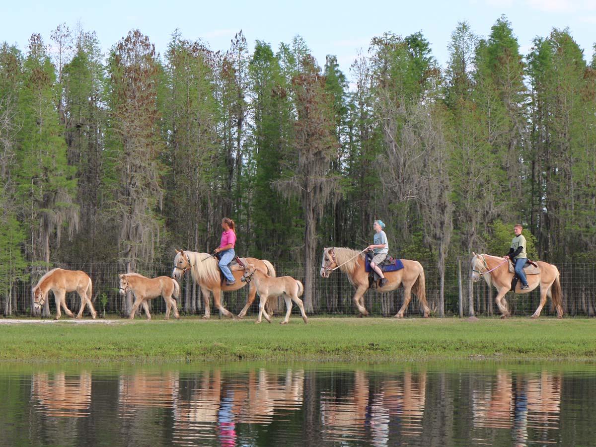 Things to Do Orlando for Adults bg-horsebacksafari.jpg